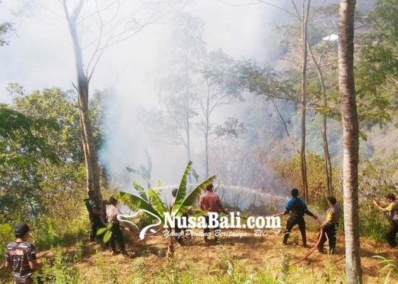 Nusabali.com - sehari-kintamani-dilanda-tiga-kebakaran