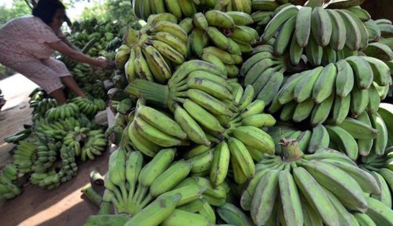 www.nusabali.com-bali-impor-32-truk-pisang-per-hari