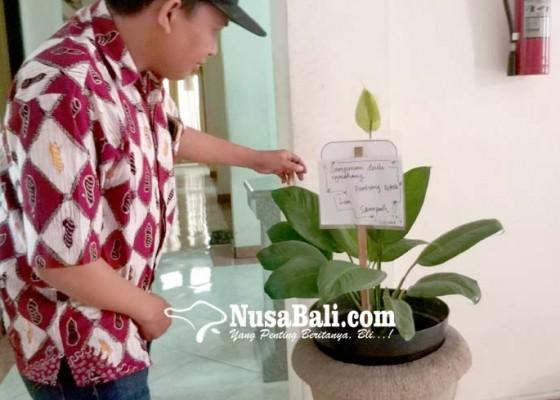Nusabali.com - kerap-dijadikan-bak-sampah-tanaman-hias-dipasangi-imbauan