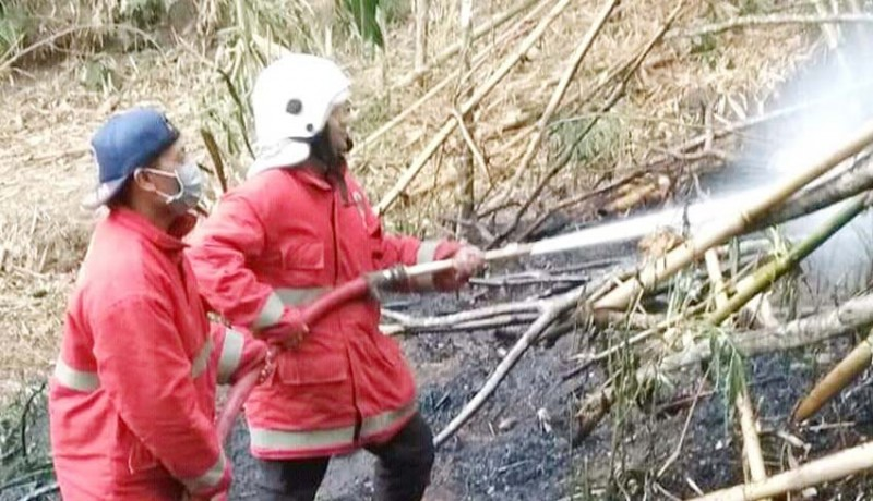 www.nusabali.com-lahan-bambu-terbakar