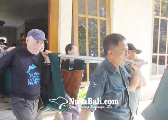 Nusabali.com - dua-lumba-lumba-hotel-melka-dievakuasi