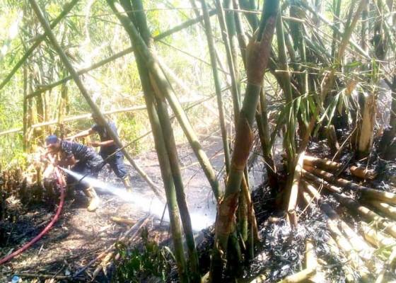 Nusabali.com - bakar-sampah-tegalan-terbakar