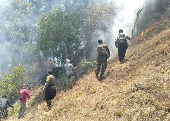 Nusabali.com - 5-hektare-lahan-hutan-bukit-sari-songan-terbakar