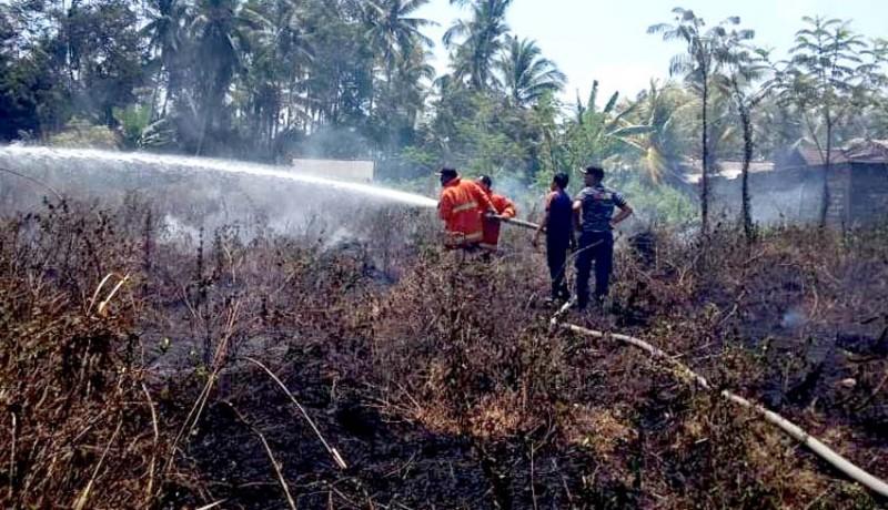 www.nusabali.com-25-are-kebun-sengon-terbakar-di-tegal-cangkring