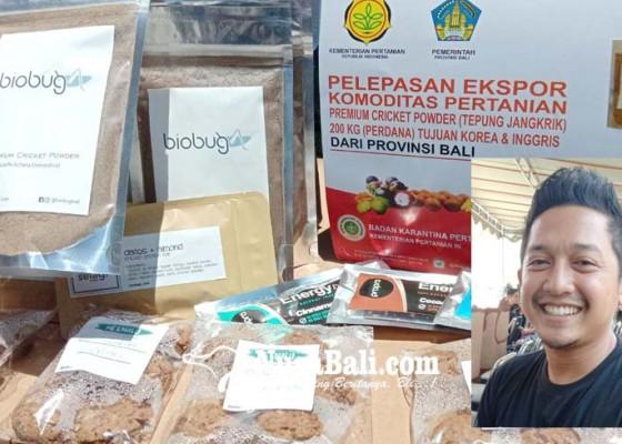 Nusabali.com - tepung-jangkrik-bali-diekspor-ke-inggris-dan-korea