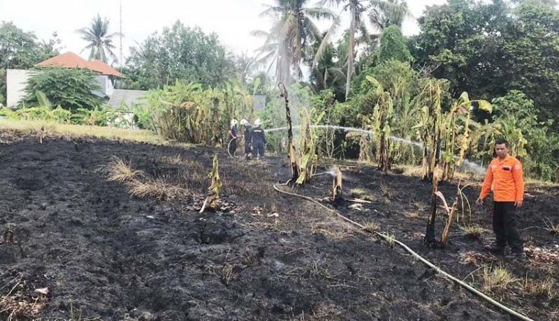 www.nusabali.com-kemarau-tiga-lahan-di-badung-terbakar