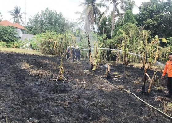 Nusabali.com - kemarau-tiga-lahan-di-badung-terbakar
