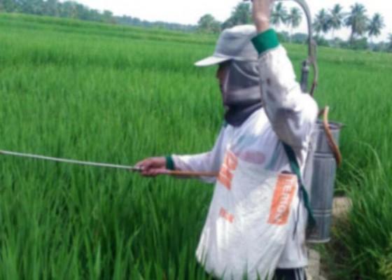 Nusabali.com - hama-kutu-putih-ancam-ekspor-hortikultura-bali