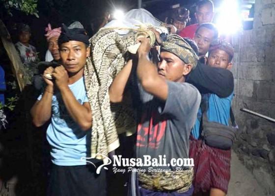 Nusabali.com - bocah-6-tahun-tewas-tertimpa-pohon-roboh