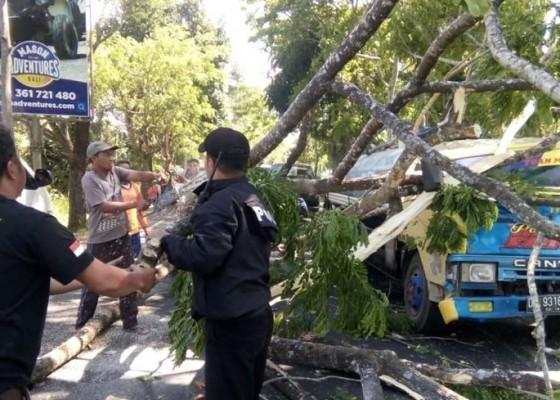Nusabali.com - truk-tertimpa-pohon-sopir-alami-luka-luka