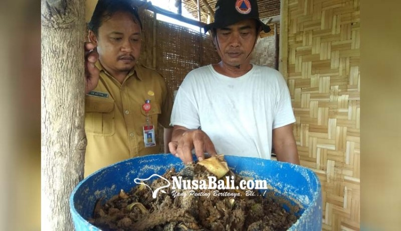www.nusabali.com-upaya-mengurai-sampah-organik-perbekel-dencarik-budidaya-maggot