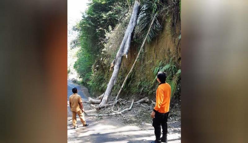 www.nusabali.com-angin-kencang-pohon-tumbang-tutup-jalan-di-petang