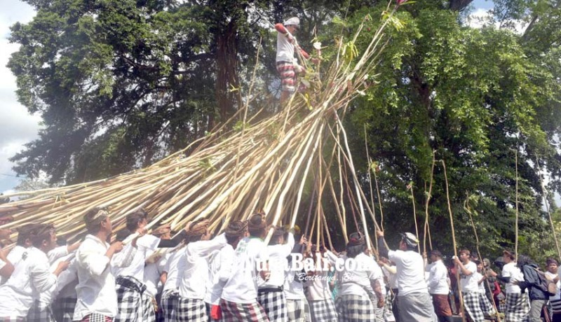 www.nusabali.com-desa-munggu-kemas-tradisi-makotek-jadi-atraksi-wisata
