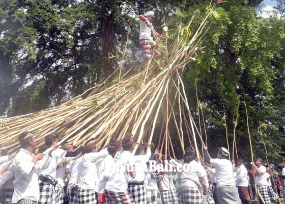 Nusabali.com - desa-munggu-kemas-tradisi-makotek-jadi-atraksi-wisata