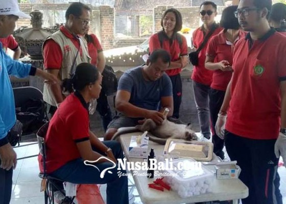 Nusabali.com - keswan-sterilisasi-hewan-penular-rebies