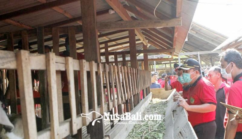 www.nusabali.com-10-kelompok-ternak-tani-digelontor-440-ekor-kambing