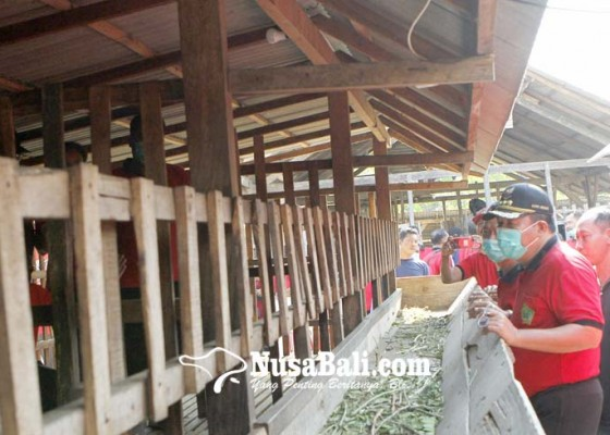 Nusabali.com - 10-kelompok-ternak-tani-digelontor-440-ekor-kambing
