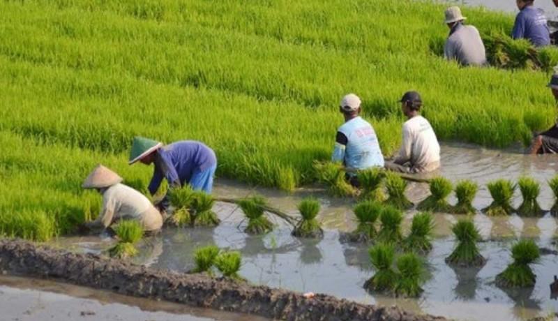 www.nusabali.com-digagas-insentif-bagi-petani-dan-pemilik-lahan-pertanian