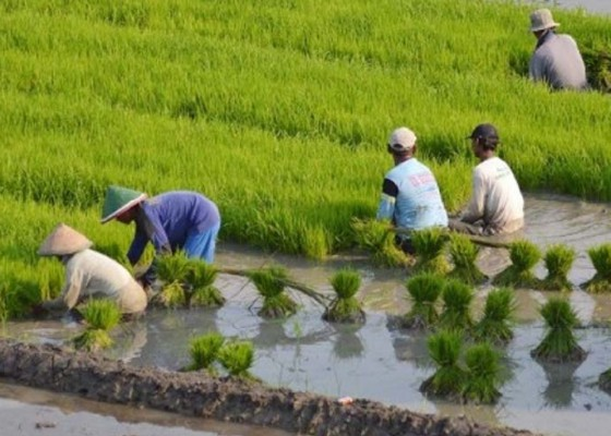 Nusabali.com - digagas-insentif-bagi-petani-dan-pemilik-lahan-pertanian