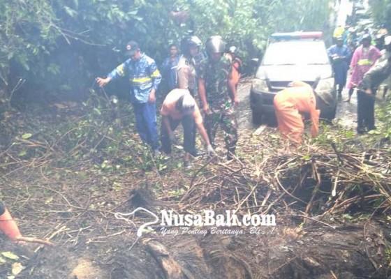 Nusabali.com - hujan-tiba-pohon-bertumbangan