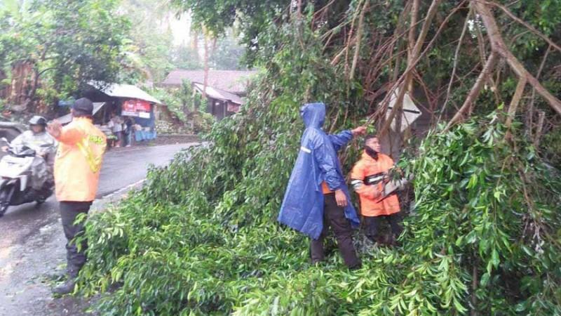 www.nusabali.com-hujan-pohon-tumbang