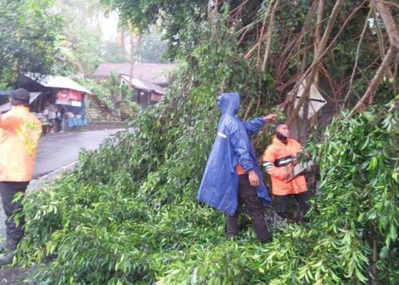 Nusabali.com - hujan-pohon-tumbang