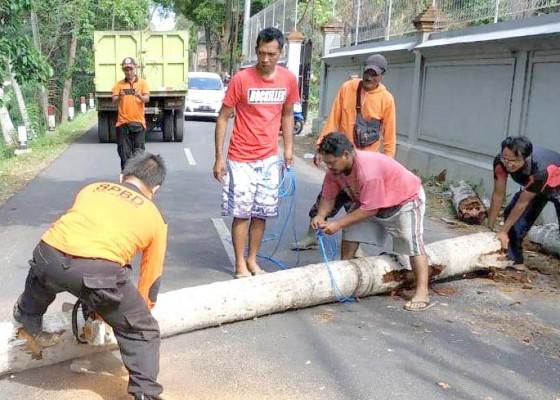 Nusabali.com - pohon-tumbang-tutup-akses-jalan