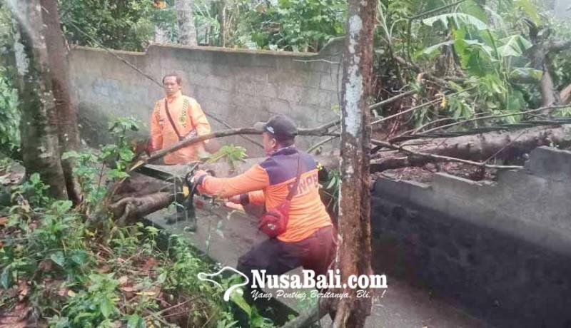 www.nusabali.com-pohon-tumbang-timpa-panyengker-dan-kabel-listrik