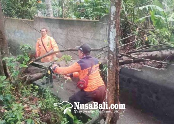 Nusabali.com - pohon-tumbang-timpa-panyengker-dan-kabel-listrik