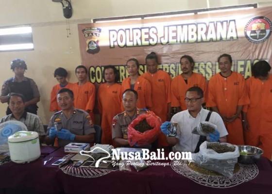 Nusabali.com - polres-jembrana-sita-2-kg-ganja-kering