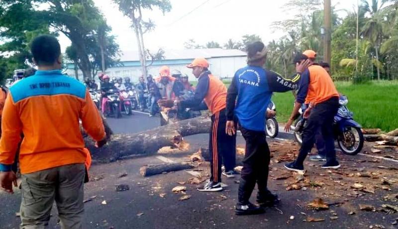 www.nusabali.com-persiapan-musim-hujan-bpbd-pangkas-pohon-mati