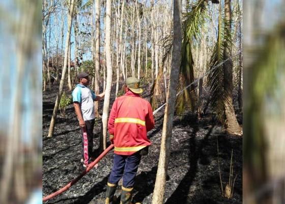 Nusabali.com - sehari-tiga-lahan-kebun-terbakar-di-jembrana