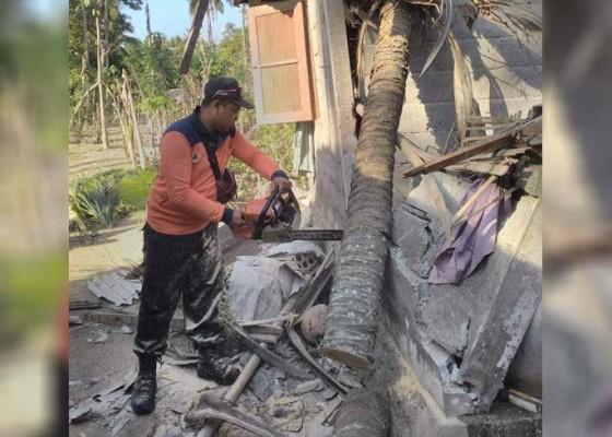 Nusabali.com - pohon-kelapa-timpa-rumah-korban-terluka