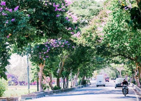 Nusabali.com - percantik-wajah-kota-pohon-tabebuya-dan-tangi-mulai-berbunga