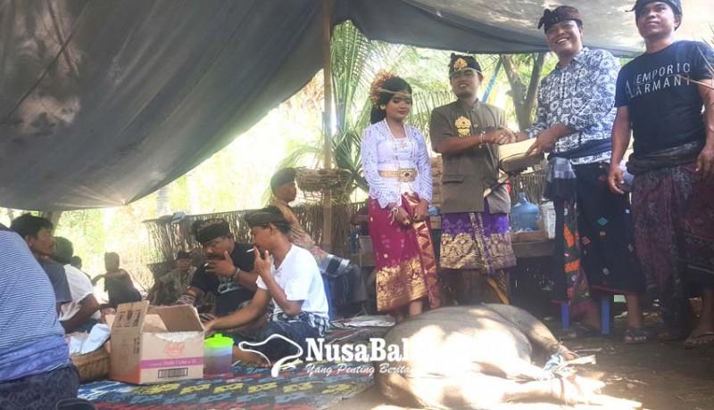 www.nusabali.com-pengantin-yang-komitmen-tak-pakai-plastik-dalam-upacaranya-dapat-hadiah-seekor-babi-hitam