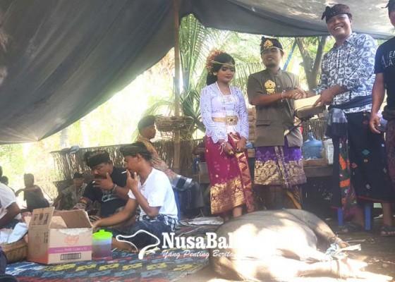 Nusabali.com - pengantin-yang-komitmen-tak-pakai-plastik-dalam-upacaranya-dapat-hadiah-seekor-babi-hitam