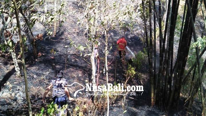 www.nusabali.com-1-ha-lahan-kebun-cengkih-terbakar-di-yeh-mekecir