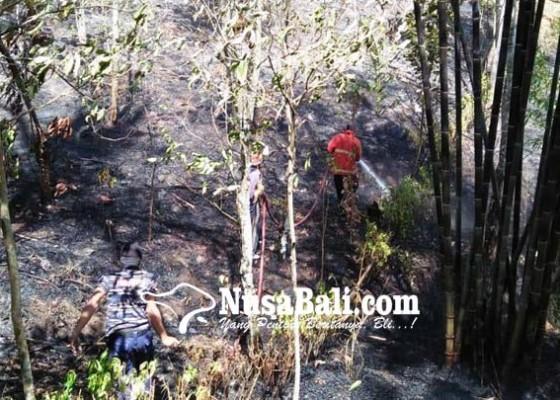 Nusabali.com - 1-ha-lahan-kebun-cengkih-terbakar-di-yeh-mekecir
