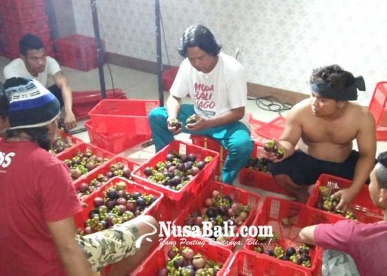 Nusabali.com - bali-siap-kirim-kembali-manggis-ke-china