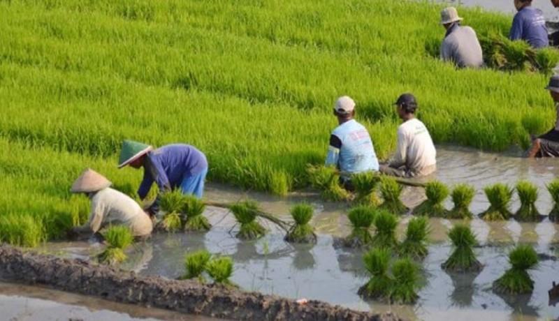 www.nusabali.com-indonesiaterancam-krisis-jumlah-petani