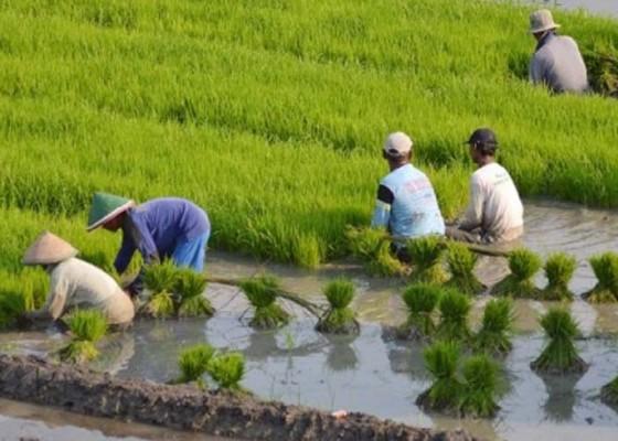 Nusabali.com - indonesiaterancam-krisis-jumlah-petani