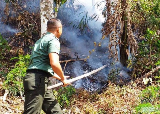 Nusabali.com - bukit-seked-terbakar