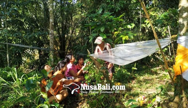 www.nusabali.com-pohon-dibalut-kain-putih-kuning-warga-berdatangan-mohon-berkah