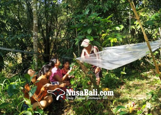 Nusabali.com - pohon-dibalut-kain-putih-kuning-warga-berdatangan-mohon-berkah