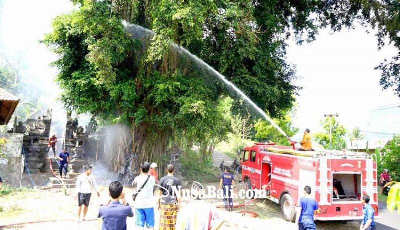 www.nusabali.com-beringin-keramat-terbakar