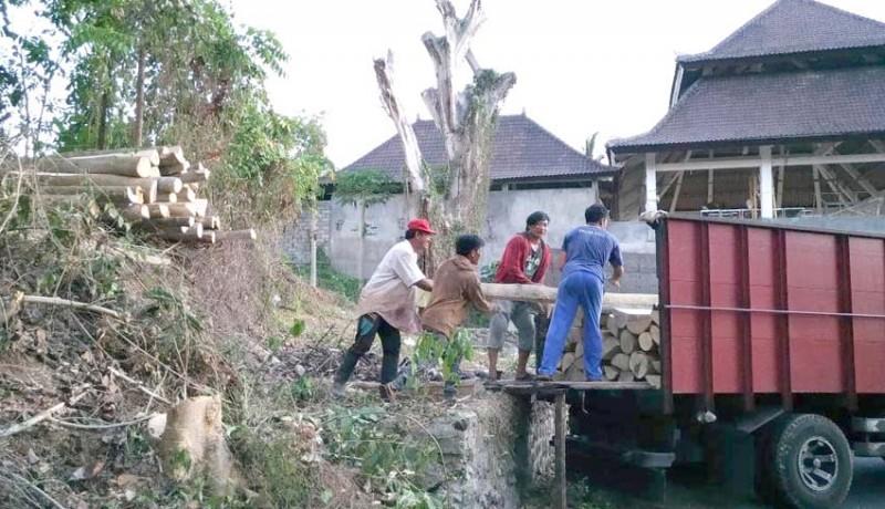 www.nusabali.com-kayu-dari-lahan-kosong