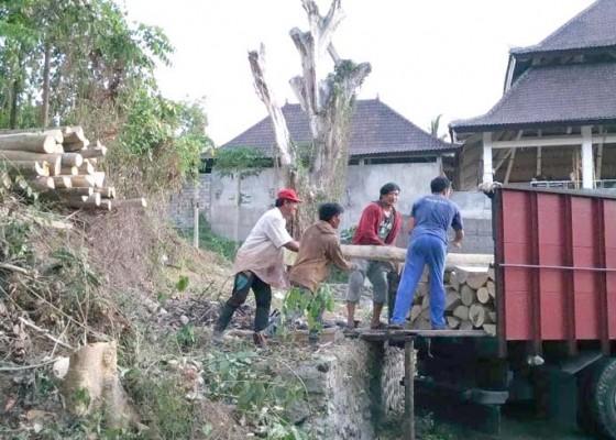 Nusabali.com - kayu-dari-lahan-kosong