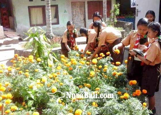 Nusabali.com - siswa-smpn-1-abang-mengolah-gemitir-jadi-keripik
