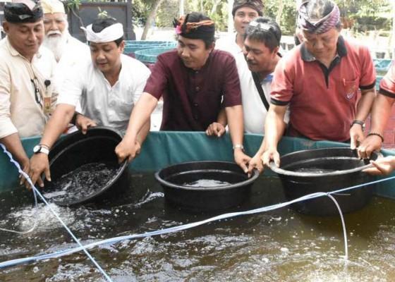 Nusabali.com - ribuan-benih-lele-dibudidayakan-dengan-metode-bioflok-di-tukad-bindu