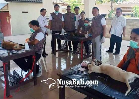 Nusabali.com - tekan-populasi-anjing-dicula